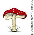 Mushroom amanita. 43305195