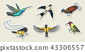 Small birds of paradise stickers. Wilson s and King of Saxony in New Guinea. Exotic tropical animal 43306557