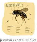Vector engraving illustration part of honey bee 43307121