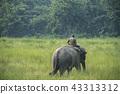 animal driver elephant 43313312