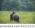 animal driver man 43313313