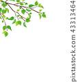 신록 가지 잎 (PNG 투명) 43313464