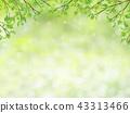신록, 잎, 이파리 43313466