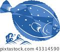 flounder, vector, vectors 43314590