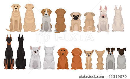 Set of dogs of different breeds, front and back view. Cute domestic animals. Home pets. Flat vector 43319870
