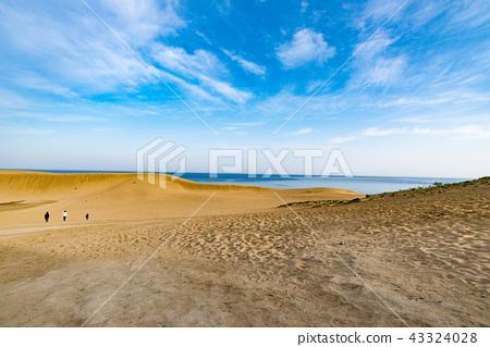 鳥取沙丘 43324028