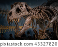 化石暴龍 43327820