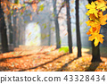 Autumn colonade with a gateway and yellow blades. 43328434