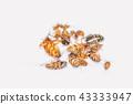 cockroaches, Blattodea, Blattaria, Dictyoptera, on 43333947