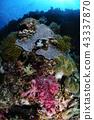 珊瑚 珊瑚礁 海底 43337870