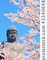 茨城縣Ushiku Daibutsu和Sakura 43340648