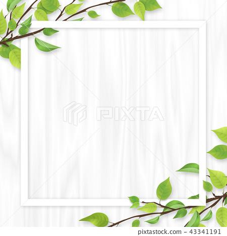 신록 잎 흰색 프레임 시라 키 43341191