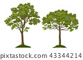 Trees Pine and Maple 43344214
