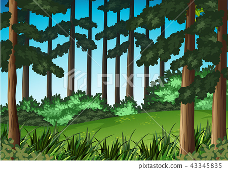 Wood scene landscape background 43345835