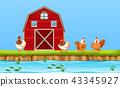 Chickens on farm scene 43345927
