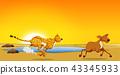 A cheetah hunting deer 43345933