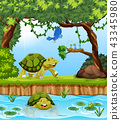 Turtle in the jungle 43345980