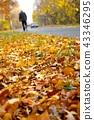 Autumn park 43346295
