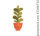 Green succulent house plant in ceramic pot, elegant home or office decor vector Illustration on a 43346732