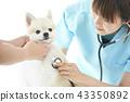 獸醫 43350892