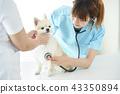 獸醫 43350894
