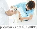 獸醫 43350895