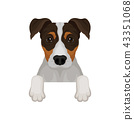 jack, russell, terrier 43351068