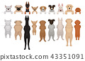 Dogs of different breeds hanging on border. Portraits of muzzles with paws and full bodies. Front 43351091