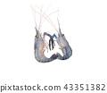 Giant freshwater prawn, Fresh shrimp isolate 43351382