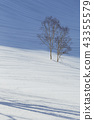 Spring snowy mountains and trees (Happo-one) 43355579