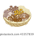 mushroom, assortment, the taste of autumn 43357839