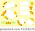 黃色非洲菊框架 43358270