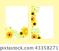 黃色非洲菊框架 43358271