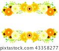 黃色非洲菊框架 43358277