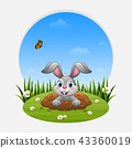 Cartoon rabbit come out of the hole on the grass 43360019