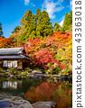 Pond of Lake Eastern Miyama Baida-ji in autumn 43363018