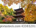Lake East Miyama Saishimera Triple-tower and autumn leaves 43363201