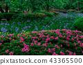 Kanrokuen的春天 43365500