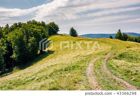 winding path uphill in to the forest 43366298