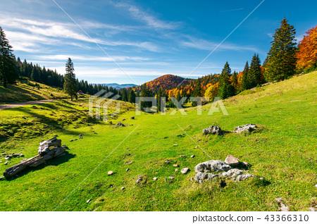 autumn landscape of Apuseni National park 43366310