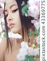 woman asian sakura 43369775