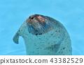 물범, 바다표범, 동물 43382529