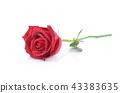 เบ่งบาน,บานสะพรั่ง,ดอกไม้ 43383635