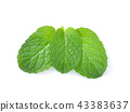 mint leaves isolated on white background 43383637