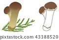 버섯, 식용버섯, 가을의 미각 43388520