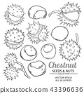 chestnut vector isolated 43396636
