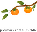 japanese, persimmon, fruit 43397687