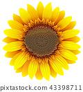 Vector Sunflower Icon 43398711