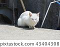 White cat 3 43404308