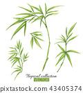 bamboo, green, leaf 43405374
